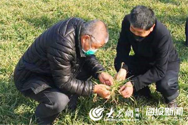 统防统治 下沉服务 滨城区农业农村局防疫春耕两不误