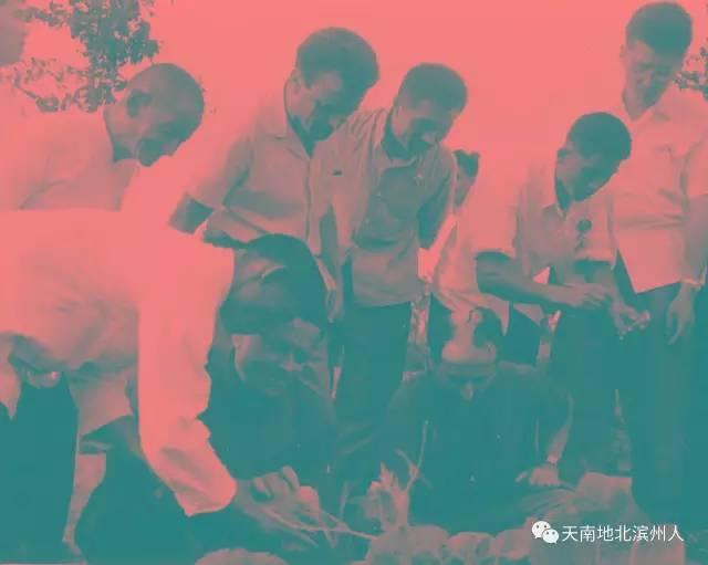 """杨柳雪:周总理亲手树起的""""棉区的一面红旗"""""""