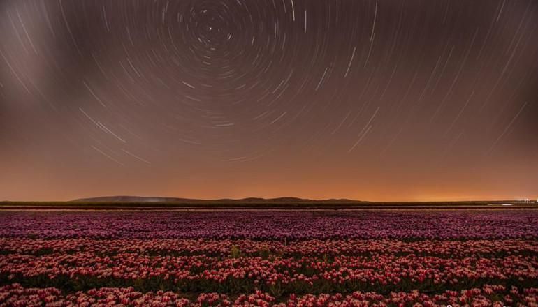 当地时间4月18日,土耳其科尼亚,五颜六色的郁金香花田夜晚与星空为伴,美丽极了。