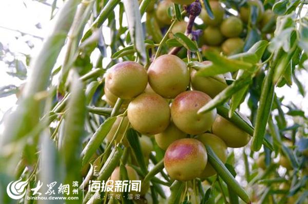 http://www.110tao.com/zhifuwuliu/73944.html